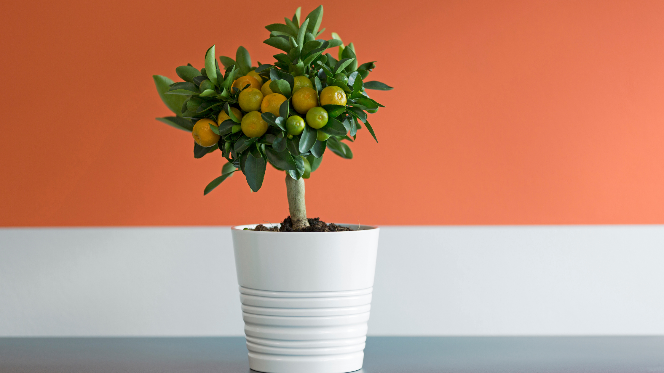 Help Your Productivity with Indoor Plants